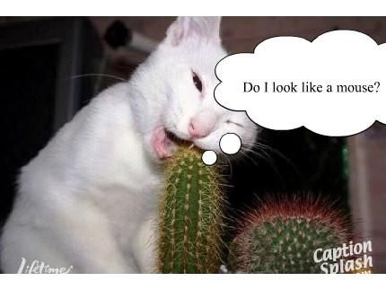 Funny cat pictures with captions cat pictures with captions