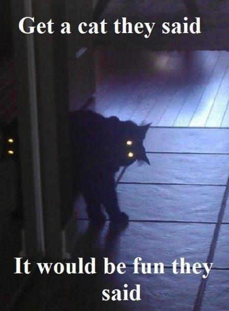Scary Cat Quotes QuotesGram