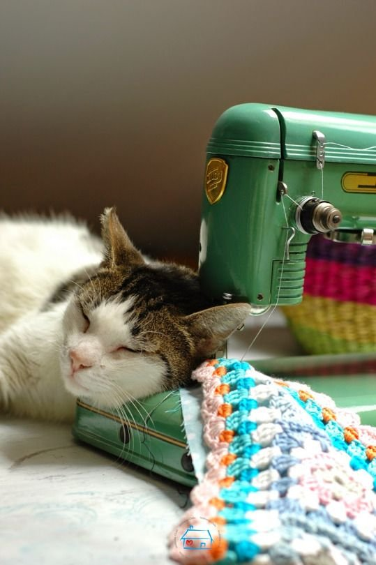 cat resting on a vintage sewing machine