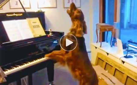 Very funny dog plays pianos and sings in