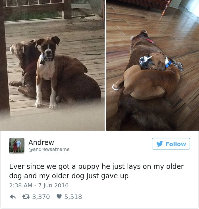 4 18 Funny Dog Tweets For The Dog Lovers Out There
