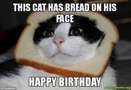 cat happy birthday wish meme