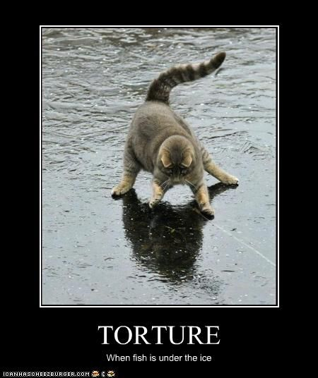 funny cat pictures fish under the ice