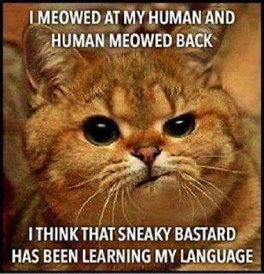 "Funny Cat refrigerator magnet 3 1 2 x 3 1 2"""