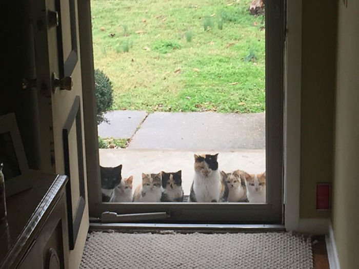 1 My Parents Started Feeding A Stray Kitten A Couple Weeks Ago This Was Their Front Porch Today