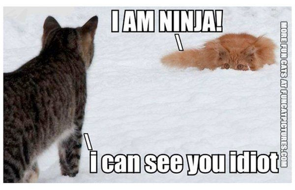 See the Inspirational Funny Cat Snow Pictures