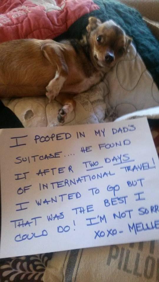 24 dog shaming