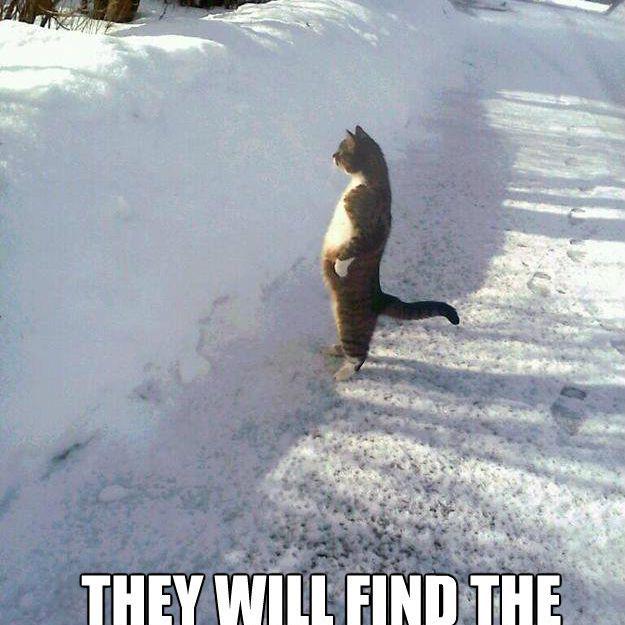 Spring cat meme