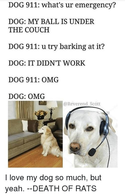 Love Memes and Omg DOG 911 what s ur emergency DOG