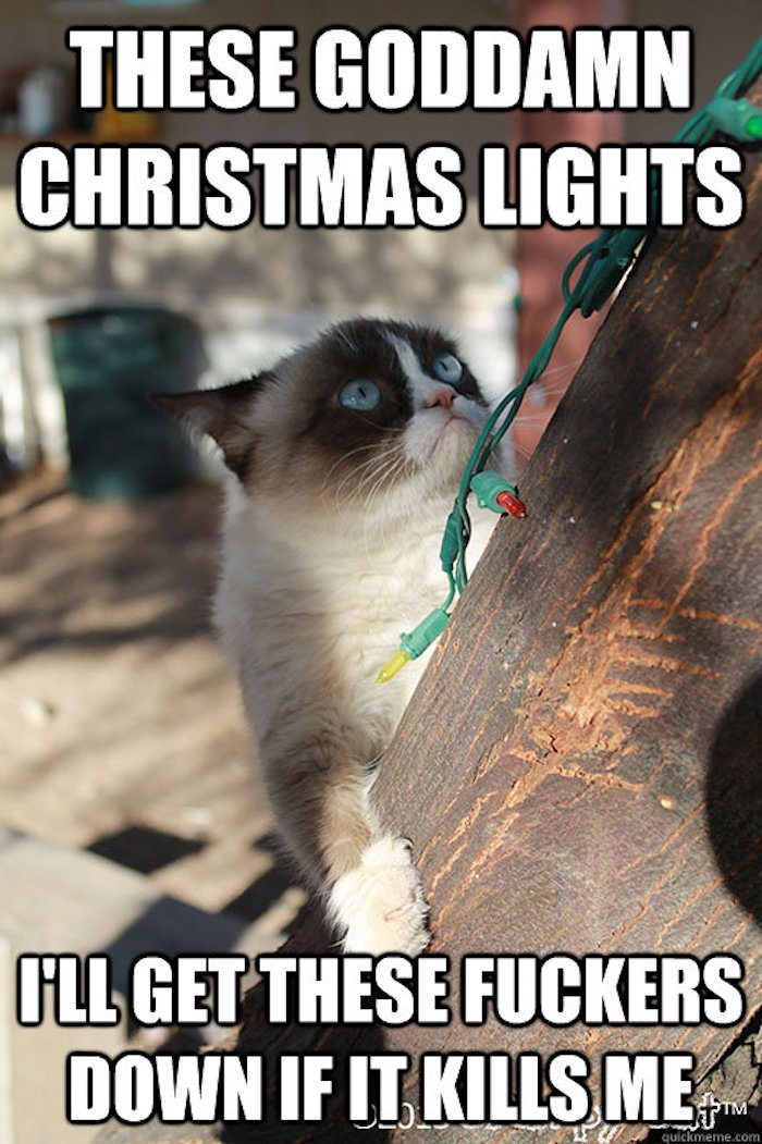 21 funny memes that sum up cats love hate relationship with Christmas