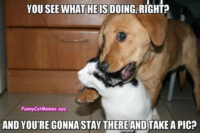 File Cat and dog Funny Cat Memes