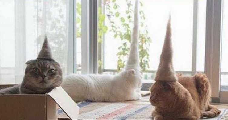 Cats Upon Cats Wearing Cute Tiny Hats