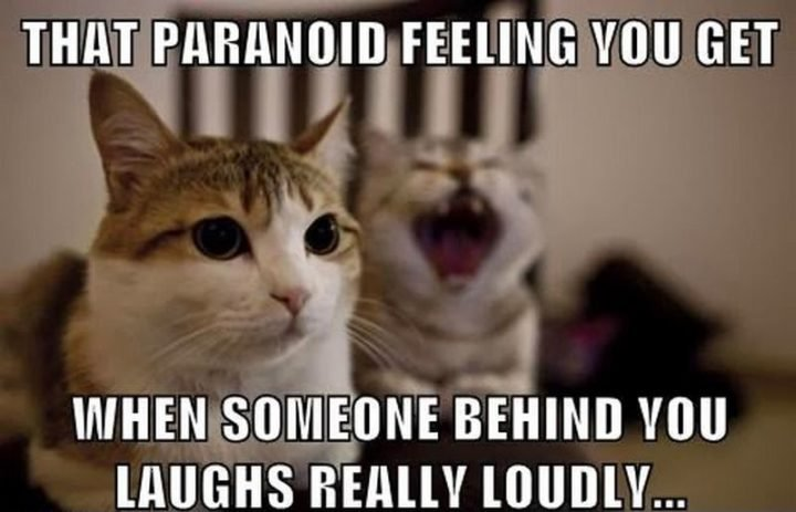 """55 Funny Cat Memes """"That paranoid feeling you when someone behind you laughs """""""
