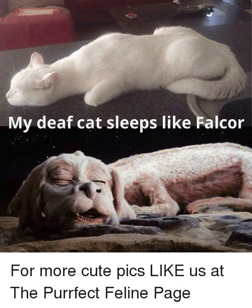 Cute Memes and Sleeping My deaf cat sleeps like Falcor For more cute