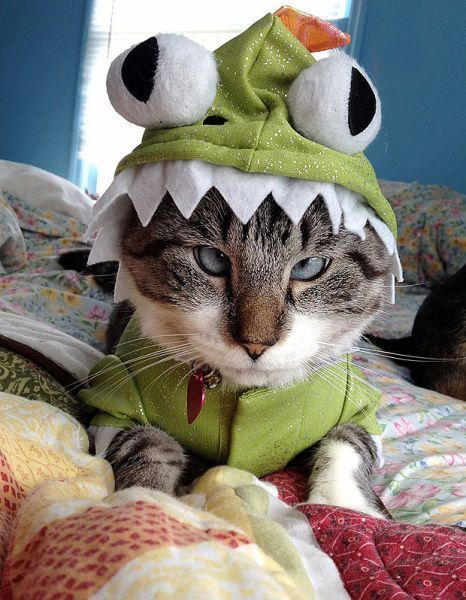Halloween Pet Costumes The cat looks beyond thrilled to be saddle with this fancy costume