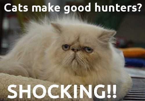 cat funny cat and hunter image