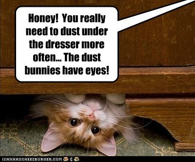 captions Cats clean dust dusty bunny eyes mutate