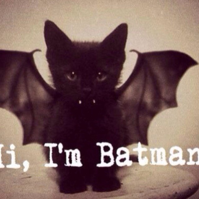 hi i m batman batman cute kitten cat sweet