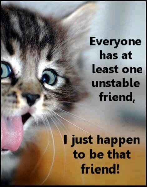 Funny cat cute quote