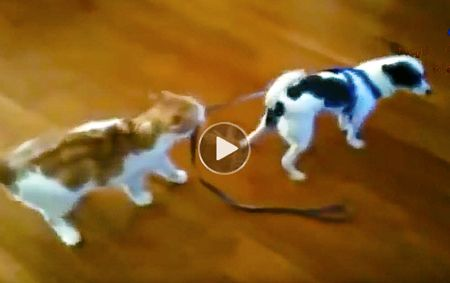 Cats annoying dogs is best funny youtube pilation