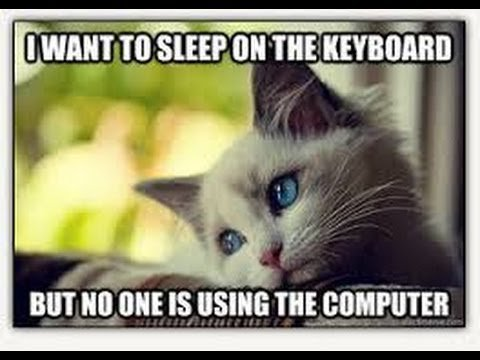 Funny Cat Memes 2 2014