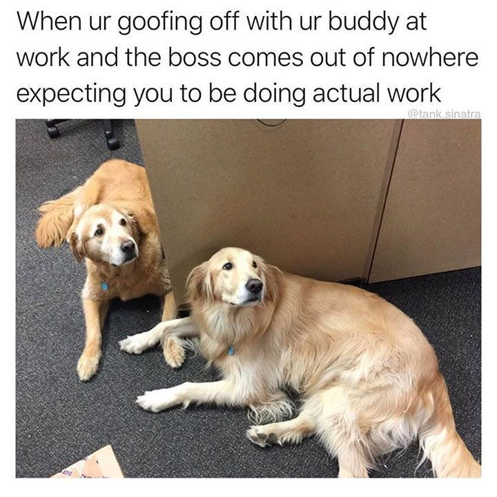 See the Marvelous Funny Dog Work Memes
