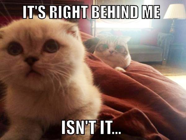 Meredith sneaks up on Olivia in Taylor Swift s funny meme