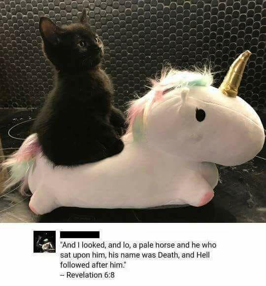 black cat unicorn