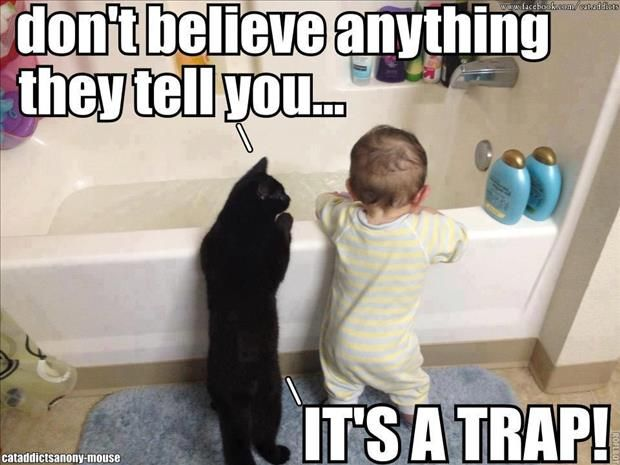 See the New Funny Cat and Baby Pictures