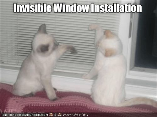 Invisible cat meme in which kittens appear to be installing a large pane of invisible glass