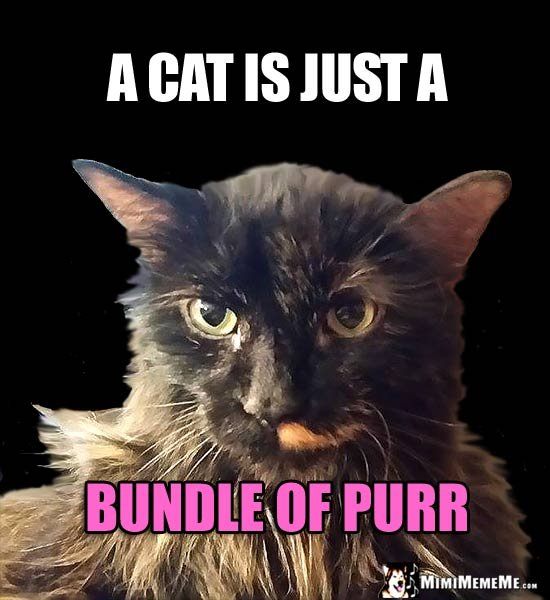 Cat Humor A cat is just a bundle of purr