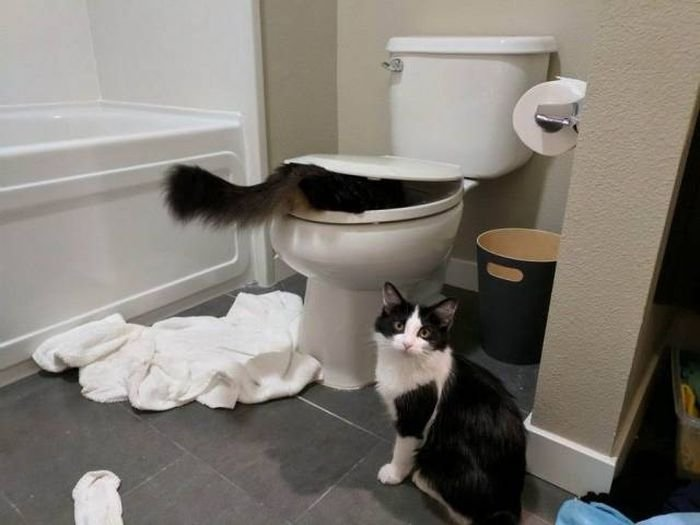 See the New Funny Cat Pictures with Captions Bathroom