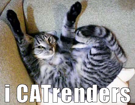 cat funny funny cats surrender cat meme cat jokes cat