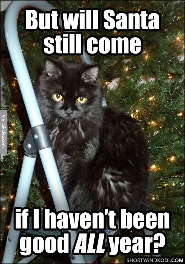 Will santa still e cat christmas meme