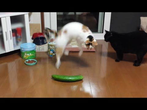 Check out these hilarious cats ting startled by all sorts of things including fake spiders cucumbers kitchen timers and even their own reflection