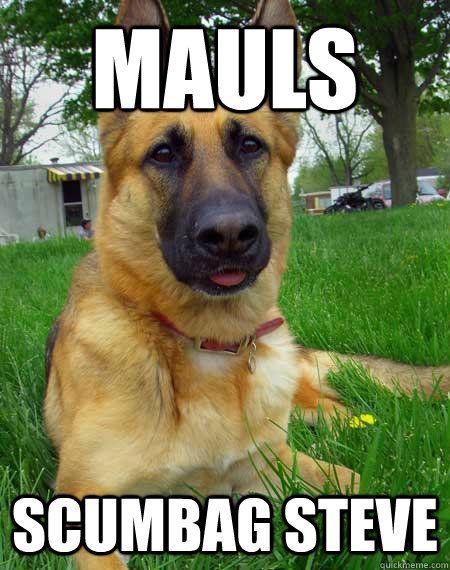 Mauls scumbag steve Best Friend Dog