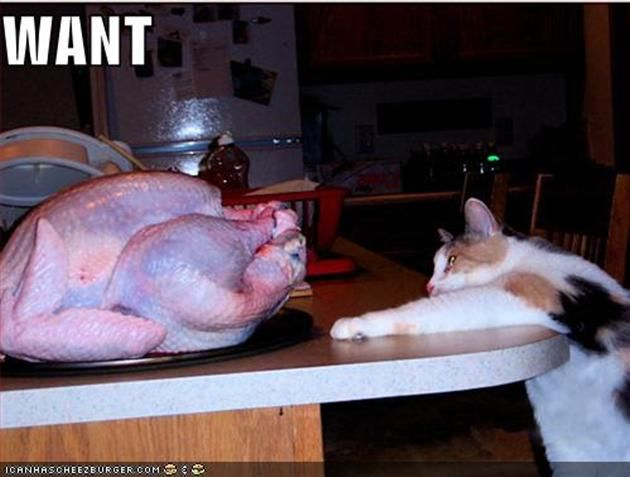 Vh funny pictures cat wants turkey