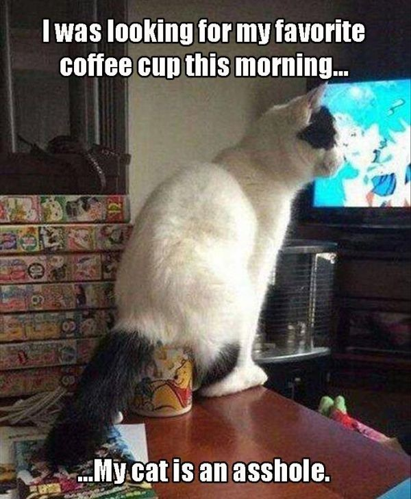 Nothing Says Good Morning Like Cat humor