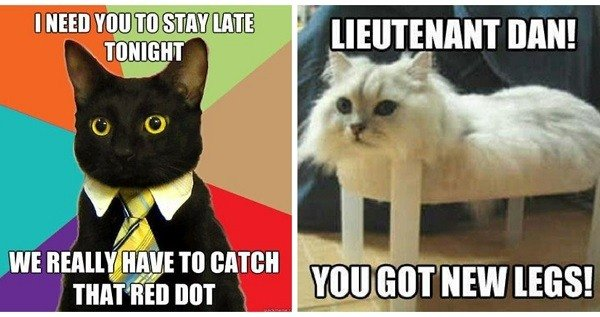funny cat memes gallery