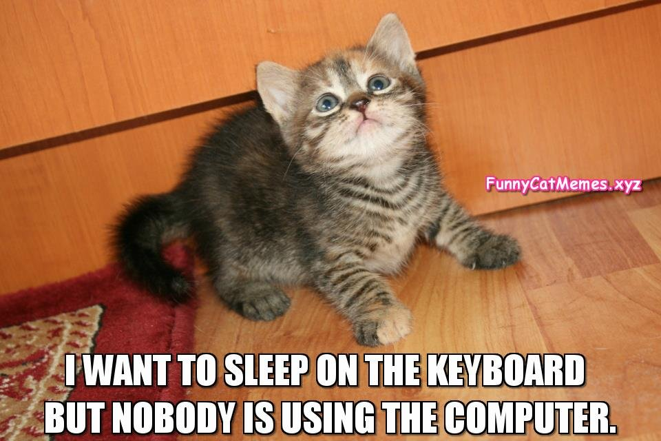 The Kitten Would Like To Sleep The Keyboard Funny Kitten MEME