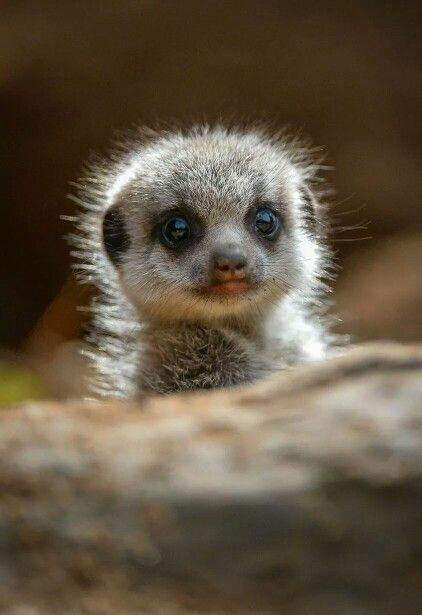20 Cute Animal Pics for Your Tuesday