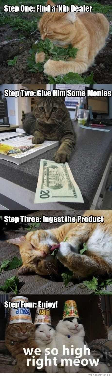 animal humor cats meme catnip s funny original source