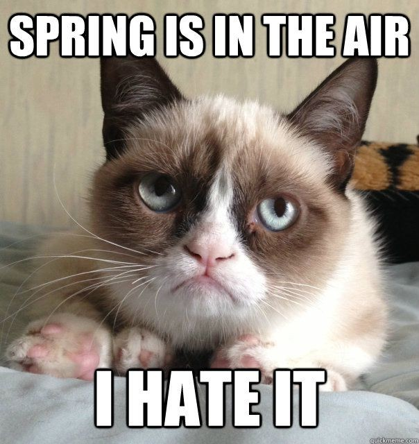 SPRING BEAUTIFUL Grumpy Cat 56f154ff5f9b5867a1c6b09e
