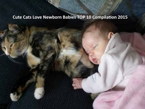 Cute Cats Love Babies Funny Cat Love Baby TOP 10