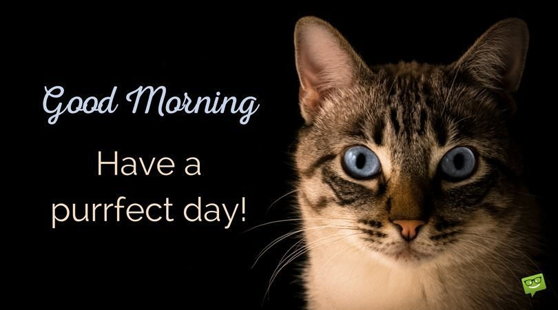 Good Morning on photo of cute cat