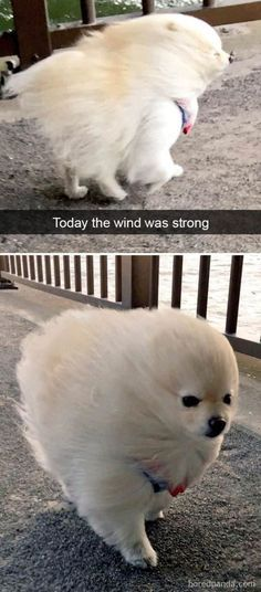25 Pics Funny Dog Memes to Cheer You Up on a Bad Day Lovely Animals