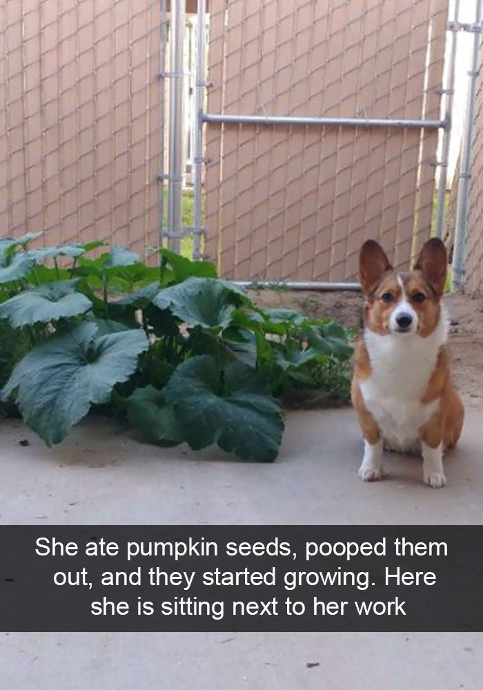 150 Funny Animal Snapchats