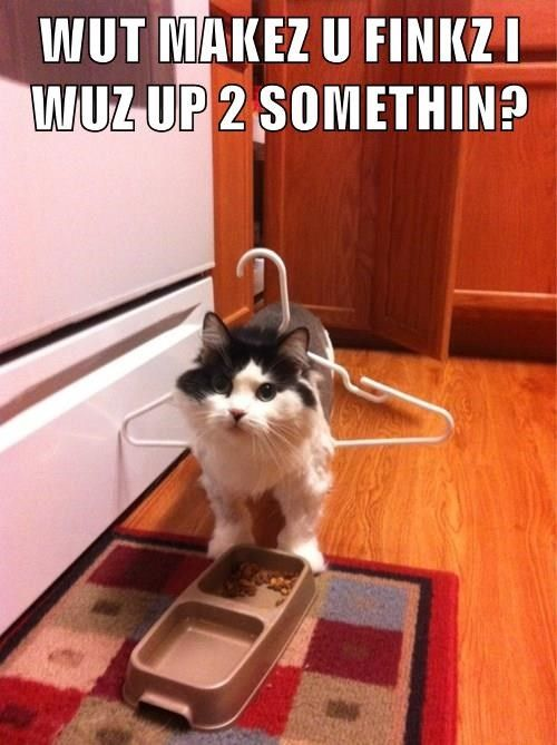 funny meme of a cat with a hanger that doesn t understand what is so
