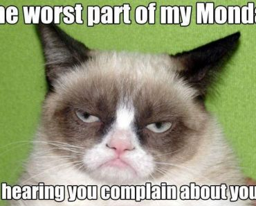 See the Shocking Clean Funny Grumpy Cat Memes