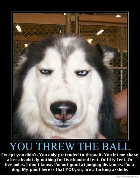 See the Shocking Funny Animal Balls Memes